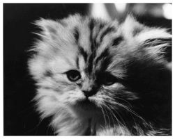Untitled Kitten by Fohat