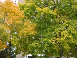 Canadian Fall Colours 36 by Aswang301