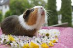 Smelling the piggy paradise by Calitha-Lena