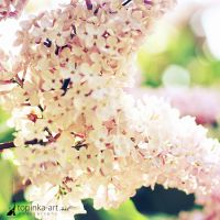 lilac. by topinka