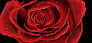 Red Rose by nadzie