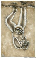 100 Primates - Gibbon by kyoht