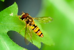 G92 1651macro-insect by Partists