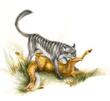 Marsupial panther by hontor