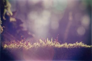 Free Wallpaper - lit moss by blendstufe