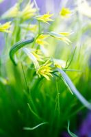 Yellow and green by rainman65
