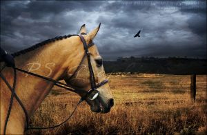 Premade Buckskin by PS-Graphics