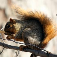 Autumn Squirrel by AndehDulac