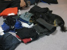 Marley want to sneek into the packing by GrumpySnapper