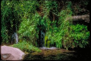 Fossil Springs Three by arizonaAlbatross