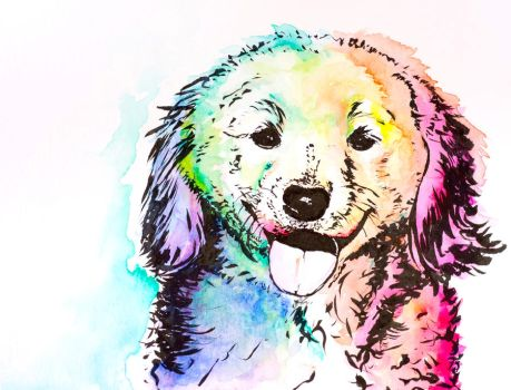 colorful dog #2 by goldfish-account