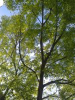 The Trees and Me - Garden - 2013-04-12.1 by Kay-March