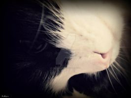 Catside Down by lisajlangrish