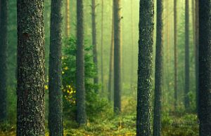Green Forest by JoniNiemela