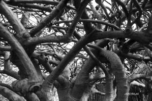 Story of branches by IgorKal