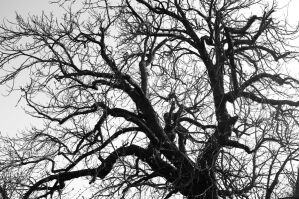 Veins of life by D1stort3r