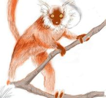 Lemur by LARK42