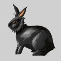 Rabbit - Practice by t-as-in-pterodactyl