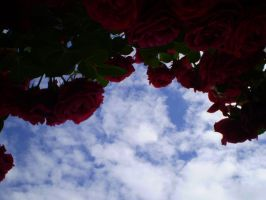 Roses of the Sky by Bahar1