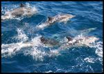dolphins everywhere by lobato