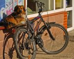 doggie and a bike by burcyna