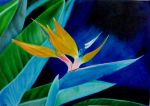 Strelitzia reginae by Sara-loves-drawing