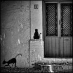 Two black cats by Buri65