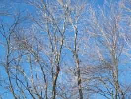 Bare Branches, Blue Sky by uglygosling