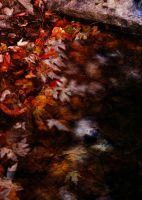 fading_autumn by RobertMichael