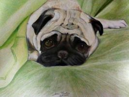 A Pug called Ernesto by AnaBarrionovo