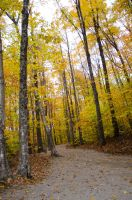 White Mountains  Fall Foliage  246 by FairieGoodMother