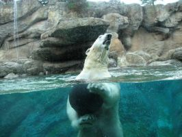 Polar Bear underwater 2 by SnowAngel-Stock