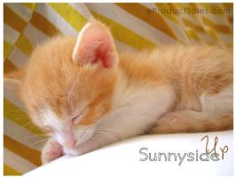 Sunny Side UP by eProductSales