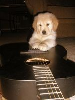 Puppy's Guitarr by hannahwidmer