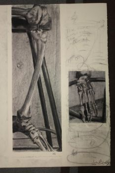 Human Foot Skeleton Study by Anodai