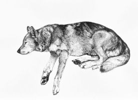 Sleeping dog by Kivuli