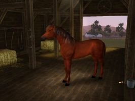 Sims3 Pets Creations Flame the Island Stallion by Senwolf10
