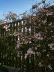 Flowers on the fence by SmwtPhotography