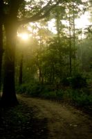 Woods at dawn 1 by steppeland