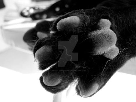 Little Paws by PeaceLoveNature