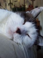Snoozy kitty by Ave606