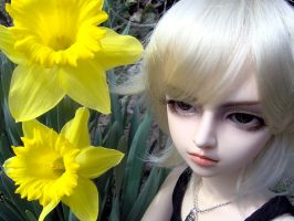 Daffodil Days by Aoi-kajin