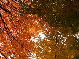 Autumn Colors by Tamtan