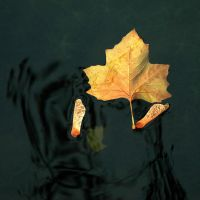 Leaf and Seed by EarthHart