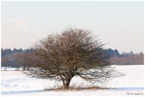 Tree in snow by Claudia008