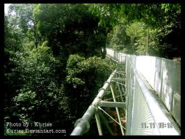 The longest Tree Top Walk by kuriee
