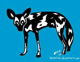 Wild Dog by bonefish