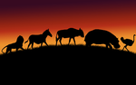 African Animals Wallpapers by Lukasiniho