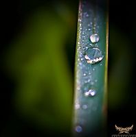 Macro water 3 by lee-sutil