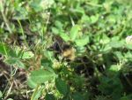 baby bumble-bee by bluedragon03